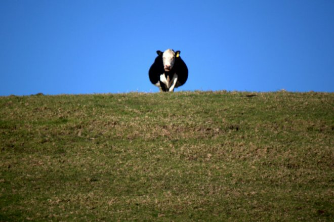 One Cow Hill
